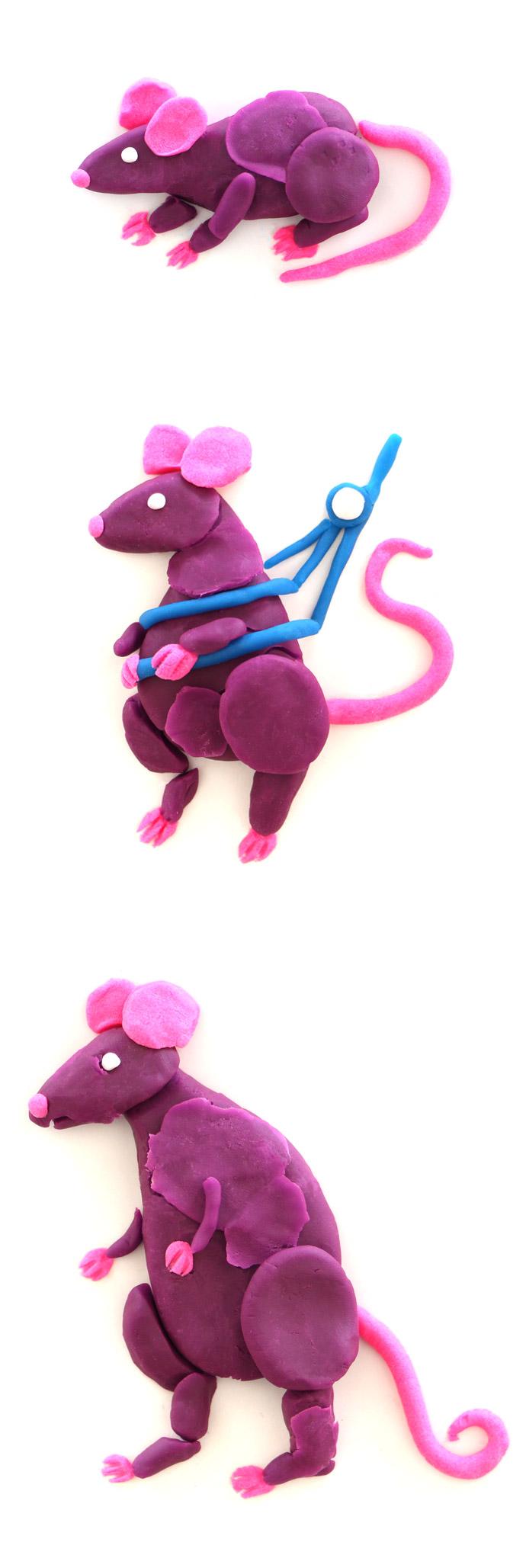 evolution_ratten