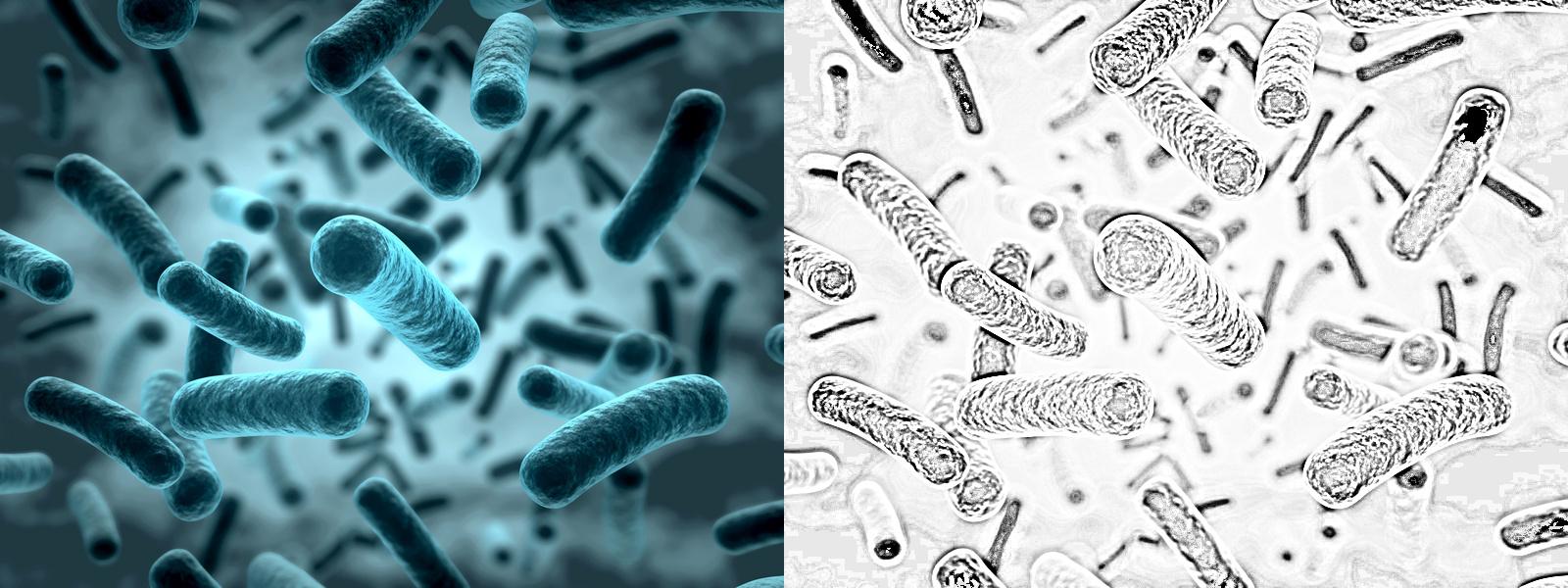 stuhl_bakterien